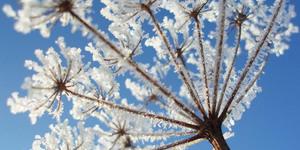 Calendrier du jardin : le mois de janvier