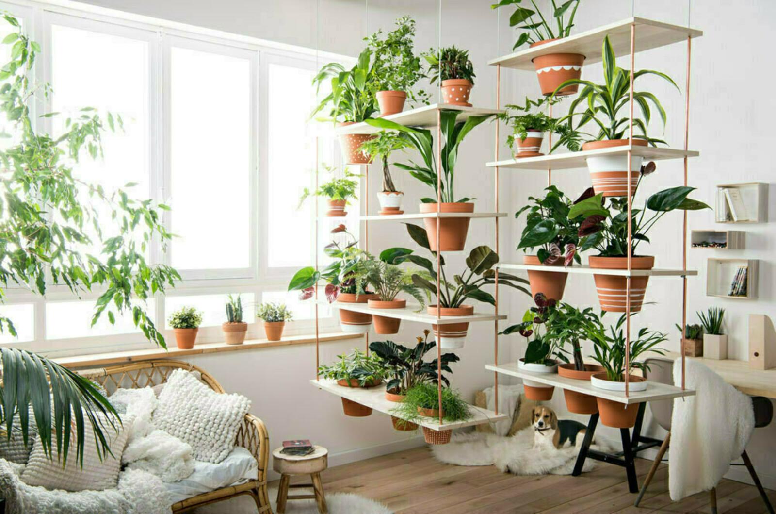 plafond vegetal a nous luintrieur vgtal qui respire la nature appartement particulier rennes. Black Bedroom Furniture Sets. Home Design Ideas