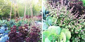Moestuinieren in eigen tuin
