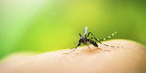 5 tips om minder last te hebben van muggen!