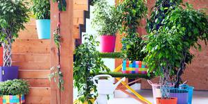 Tuinplant en woonplant januari